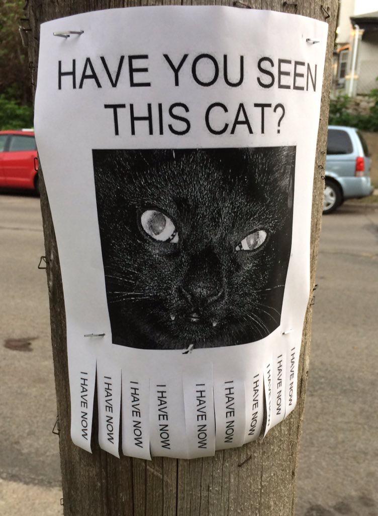 Heb jij deze kat gezien?
